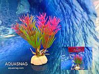 """Растение """"Aplant"""" - 10см, Е 1"""