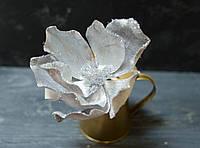 Цветок магнолии бархатной серо-стального цвета