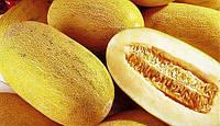 Семена Дыни сорт Козачка 244, пакет 10х15 см