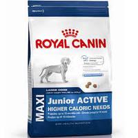 Royal Canin (Роял Канин) Maxi Junior Active
