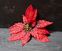 Головка пуансетии пуансетии большой атлас красной, фото 1