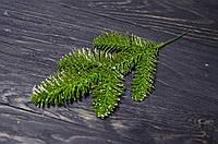 Ветка ели зеленой брокат