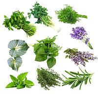 Egrow 10 разновидностей смешанных овощей специи Семена Spice Combo Mix Flower Семена Травяные растения Семена 1TopShop