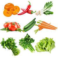 Egrow 10 видов смешанного овоща Семена Real Зеленый не-гмо органический растительный Семена Съедобная посадка 1TopShop