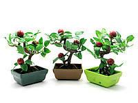 Бонсай 15см,деревья счастья,декоративные растения и бонсаи,товары для дома