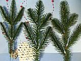 Ветвь еловая зеленая на 5 лапок от 8 грн от 100 шт, фото 3