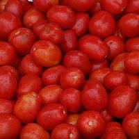 Насіння томату детермінантного, Міцено F1, (2500семян), Syngenta, Швейцарія