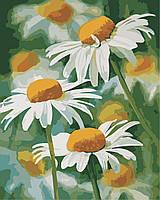 Рисование по номерам Нежные ромашки (AS0341) 40 х 50 см ArtStory