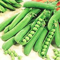 Горох овочевий,Муцио , (100000семян), Syngenta, Швейцарія