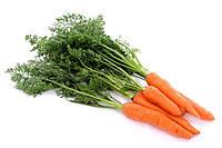 Профессиональные семена Моркови