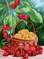 Картина по номерам на холсте Menglei Черешневое лето (VD003) 30 х 40 см