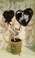 """Кофейное дерево""""Дуэт"""""""