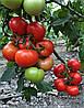 Семена томата Приос F1 \ Prios F1 500 семян Ergon seed