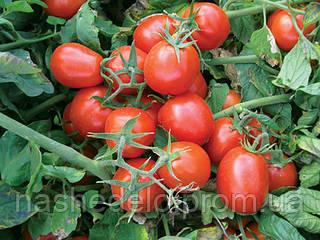 Семена томата 9661 F1 500 семян Lark Seeds