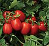 Семена томата 1015 F1 500 семян Lark Seeds