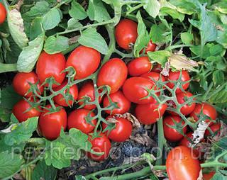 Семена томата 3402 F1 100 000 семян Lark Seeds