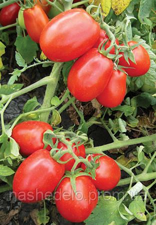 Семена томата 8504 F1 500 семян Lark Seeds