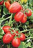 Семена томата 8504 F1 5000 семян Lark Seeds