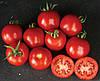 Семена томата Шаста F1 1000 семян Lark Seeds