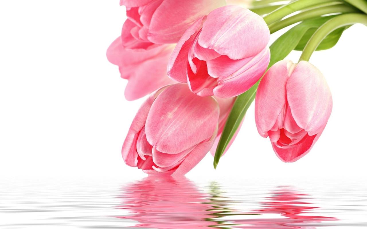 Тюльпани з доставкою свіжі