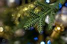 Ель Исскуственная SHERWOOD X-MAS TREE SLIM TIPS 2224 - GREEN 387699-EDL MICA H260XD132CM, фото 6