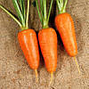 Семена моркови Шантане Красное Сердце, 500 грамм