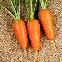 Семена моркови Шантане Красное Сердце, 500 грамм, фото 1
