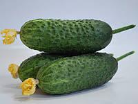 Семена огурца Маринда F1 (Marinda F1), 1000 семян