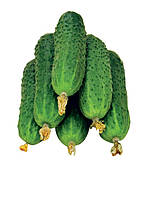 Семена огурца-корнишон Афина F1, 1000 семян, фото 1