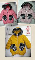 Куртки на меху для девочек,оптом, Setty Koop, 1-5 лет., арт.AP815