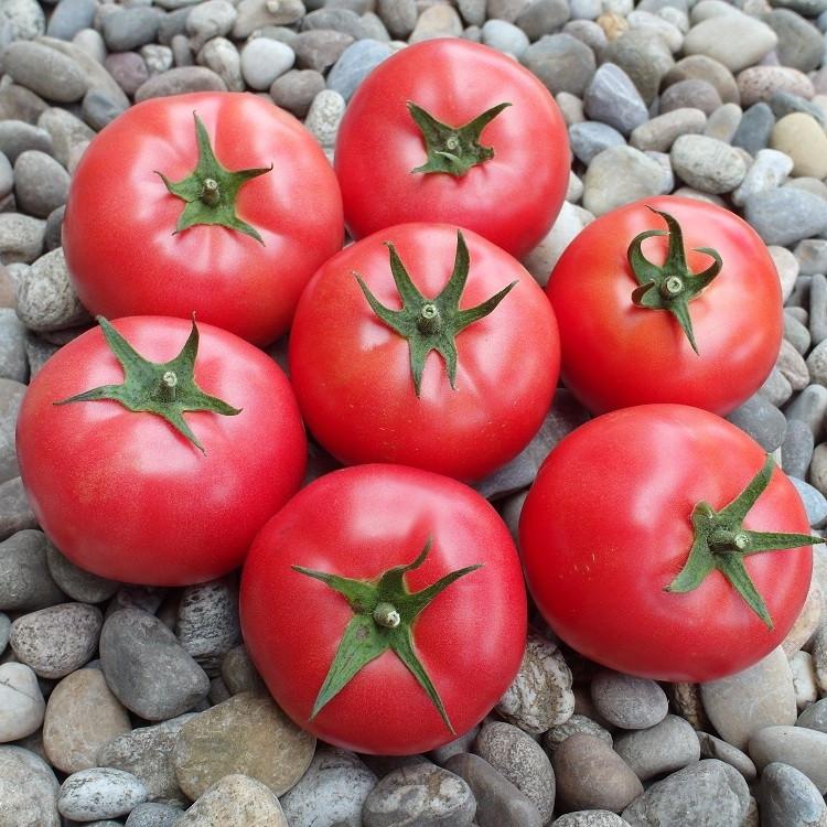 Семена томата Пинк Делайт F1 (100 сем.) Ergon