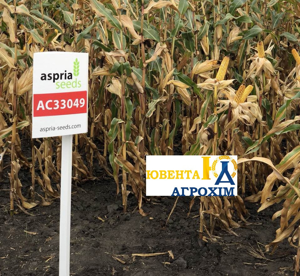 Семена кукурузы AS 33049