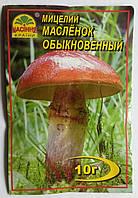 Мицелий Масленок обыкновенный 10гр