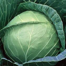 ПРУКТОР F1 / PRUKTOR F1, 20 семян — капуста белокочанная, Syngenta , фото 2