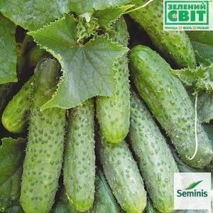 МАША F1 / MASHA F1, 10 семян — огурец партенокарпический, Seminis , фото 2