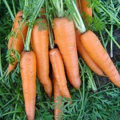 ВИТА ЛОНГА / VITA LONGA, 1г — морковь, Bejo