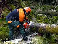 Обрезка деревьев, удаление деревьев, спилить дерево Киев и область