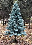 Ель премиальная голубая 2.5 м литая , фото 2