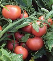 Семена томата Пинк Свинтес F1 500 семян Lark Seeds