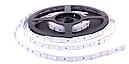 Светодиодная LED лента гибкая 12V PROlum™ IP20 5050\30 Standart, фото 3