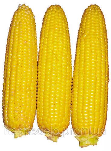 Семена кукурузы Свит Парадайз F1 2500 семян Lark Seeds
