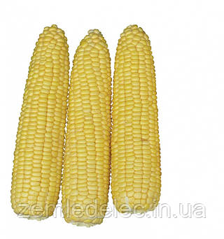 Семена кукуруза Хаммер F1 2500 семян Lark Seeds