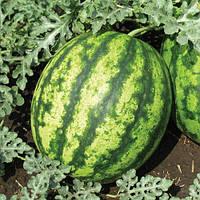 Семена арбуза Султан F1 1000 семян Lark Seeds