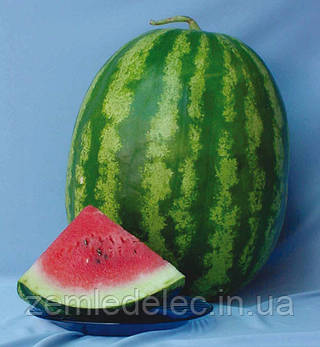 Семена арбуза АУ-Продюсер 0,5 кг. Lark Seeds