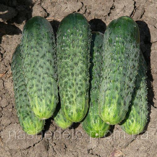 Семена огурца Каролина F1 100 семян Lark Seeds