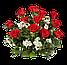 Свіжі красиві квіти троянди, фото 3