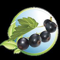 Черная смородина (Blackcurrant)