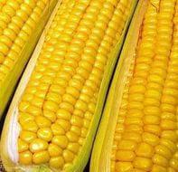 Кукуруза кормовая Любава 279 МВ кг