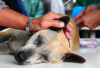 Приглашаем 27.02-2.03.2015 г. на семинар: «Анестезиология в современной ветеринарной клинике. Теория  и практика»