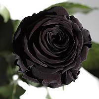 Неувядающая долгосвежая живая роза FLORICH- ЧЕРНЫЙ БРИЛЛИАНТ 7 карат